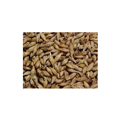 Graines de l'Orge (Cebada Tostada) Wawasana / Plantes du Pérou